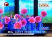 红山文化节—带您领略老年之春