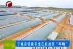 """宁城县设施农业在自治区""""叫响"""""""