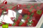 又到草莓成熟季 奶油草莓得畅销