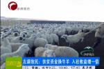 左旗牧民:扶贫资金换牛羊 入社收益增一倍