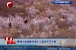 喀旗十家满族乡第十三届杏花节开幕