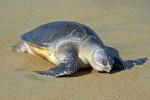 科普:滨海生物圈竟然有...
