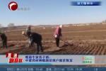 牛家营子镇:中蒙药材种植助贫困户脱贫致富