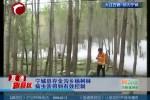 宁城县存金沟乡杨树林病虫害得到有效控制
