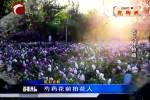 睛彩赤峰: 芍药花前拍花人