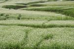第三节敖汉·牛力皋荞麦节成功举办