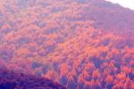 松山区:城子乡盔甲山村青山绿水变金山银山