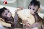 全球首例体细胞克隆猴在中国诞生!