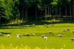 草牧场抵押贷款盘活牧民存量资产