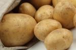 翁牛特旗:小土豆做强大市场