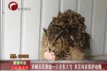 赤峰市民救助一只受伤大鸟 竟是国家保护动物
