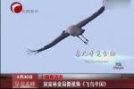 国家林业局微视频 《飞鸟中国》