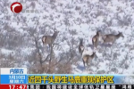 """赤峰近4千头马鹿""""走进""""央视新闻"""