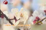 《大美中国•探春》——江苏徐州•春日繁花