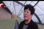 """宁城县:设施农业""""新意浓"""""""