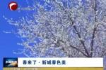 《春来了》专栏  新城春色美