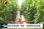 """《在习近平新时代中国特色社会主义思想指引下--新时代 新作为 新篇章》专栏:  推行农药化肥""""双减"""" 促进绿色农业发展"""