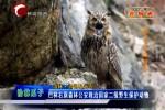 巴林右旗森林公安救治国家二级野生保护动物