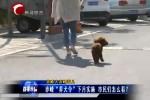 """赤峰""""养犬令""""下月实施 市民们怎么看?"""