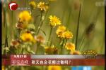 秋天也会花粉过敏吗?