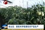 松山区:新技术护航绿色农产品生产
