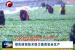 《在习近平新时代中国特色社会主义思想指引下——新时代 新作为 新篇章》 绿色防控技术助力蔬菜安全生产