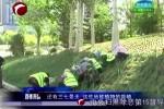 紅山區:園林綠化景觀升級 扮靚城市形象