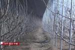 宁城县:兴哈线现代农业产业带引挚乡村振兴高速列车