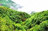 向荒山要绿 为人民造福 ——来自包头市青山区大青山南坡修复治理工程的报告
