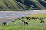 壮观!1350户牧民30万只牛羊开始游牧转场