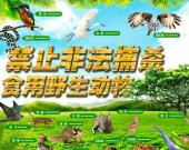 哪些野生动物禁食?家畜、家禽、鱼、海鲜适用吗?全面禁食野生动物决定全文来了!