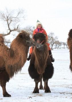 第八届银冬驼文化节