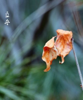 寒风中摇曳的两片树叶