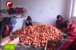 翁旗解放营子乡:设施农业让四季都是收获季