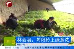 林西县:向阳岭上绿意浓