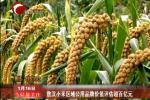 敖汉小米区域公用品牌价值评估超百亿元