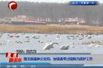 敖汉旗森林公安局:加强春季过境候鸟保护工作